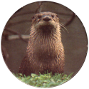 Spicy Caps Loutre-・-Otter.