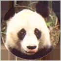 Spicy Caps Reuzenpanda-・-Panda-géant.