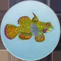 Splatch 02-Le-poisson-mandarin.