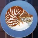 Splatch 06-Le-nautile.
