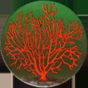 Splatch 08-Les-coraux.