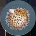 Splatch 10-Le-diodon.