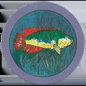 TA Ticcer 127-Fish.