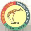 Star Foods > Animals Żyrafa.