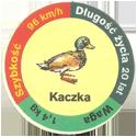 Star Foods > Animals Kaczka.