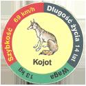 Star Foods > Animals Kojot.