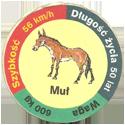 Star Foods > Animals Muł.