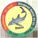 Star Foods > Animals Rekin.