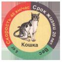 Star Foods > Animals кошка.