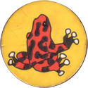 Unknown > Taxi numbered backs 75-Poison-dart-frog.