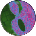 Unknown > Yin-Yangs taijitu-fingerprint.