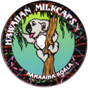 Worlds Of Fun Hawaiian Milkcaps > Kamaaina Koala Eating.