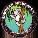 Worlds Of Fun Hawaiian Milkcaps > Kamaaina Koala Eating.