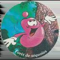 World POG Federation (WPF) > Avimage > Danone 03-Forêt-de-séquoïas.