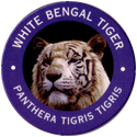 World POG Federation (WPF) > Exxon 01-White-Bengal-Tiger---Panthera-tigris-tigris.