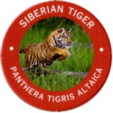 World POG Federation (WPF) > Exxon 03-Siberian-Tiger---Panthera-tigris-altaica.