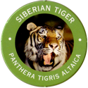 World POG Federation (WPF) > Exxon 04-Siberian-Tiger---Panthera-tigris-altaica.