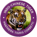 World POG Federation (WPF) > Exxon 05-Indo-Chinese-Tiger---Panthera-tigris-corbetti.