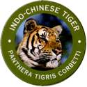 World POG Federation (WPF) > Exxon 06-Indo-Chinese-Tiger---Panthera-tigris-corbetti.