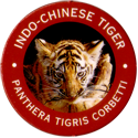World POG Federation (WPF) > Exxon 07-Indo-Chinese-Tiger---Panthera-tigris-corbetti.