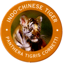 World POG Federation (WPF) > Exxon 08-Indo-Chinese-Tiger---Panthera-tigris-corbetti.