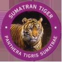 World POG Federation (WPF) > Exxon 11-Sumatran-Tiger---Panthera-tigris-Sumatrae.