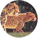 World POG Federation (WPF) > Holiday Inn Wild Collection 03-The-Cheetah-(front).