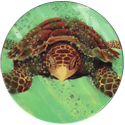 World POG Federation (WPF) > Holiday Inn Wild Collection 06-The-Hawksbill-Sea-Turtle-(front).