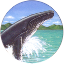 World POG Federation (WPF) > Holiday Inn Wild Collection 07-The-Humpback-Whale-(front).