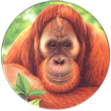 World POG Federation (WPF) > Holiday Inn Wild Collection 08-The-Orangutan-(front).