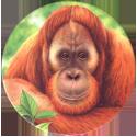 World POG Federation (WPF) > Holiday Inn Wild Collection 08-The-Orangutan-(front).
