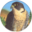 World POG Federation (WPF) > Holiday Inn Wild Collection 10-The-Peregrine-Falcon-(front).