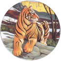 World POG Federation (WPF) > Holiday Inn Wild Collection 11-The-Siberian-Tiger-(front).